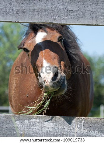 Horse chewing grass - stock photo