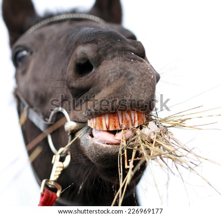 horse chewing hay - stock photo