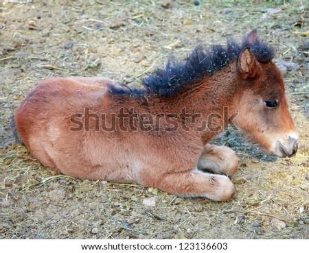 Horse cub - stock photo