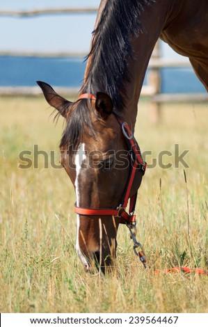 horse eat grass - stock photo