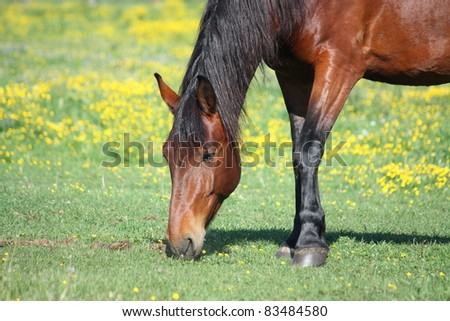 Horse eating grass - stock photo