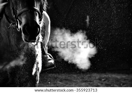 horse exhale - stock photo