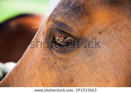 Horse Eye Close up macro - stock photo