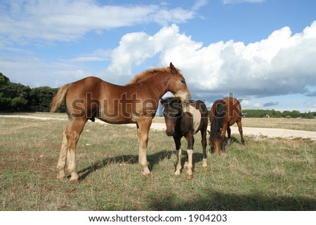 Horse family at blue sky background - stock photo