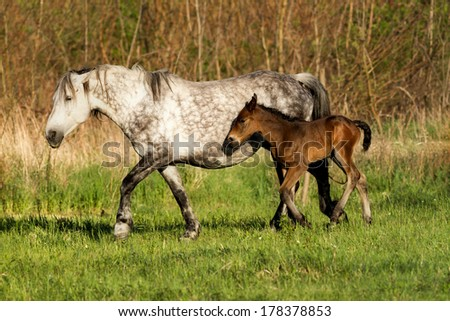 Horse family in the pasture - stock photo