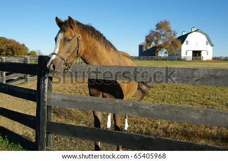 Horse Farm: A brown and white horse poses at the fence on a Virginia farm. - stock photo