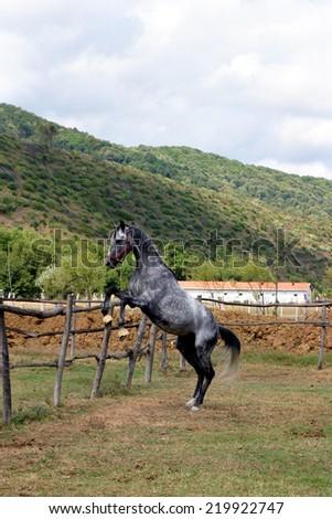 Horse farm in Istanbul, Turkey - stock photo