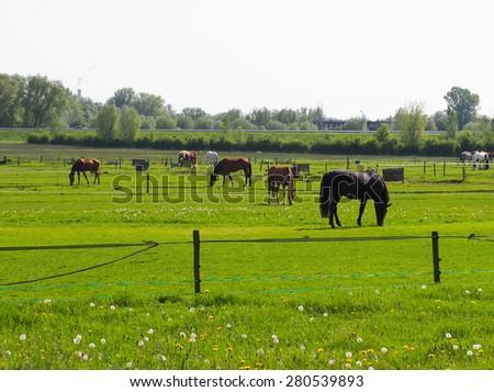 Horse farm landscape  - stock photo
