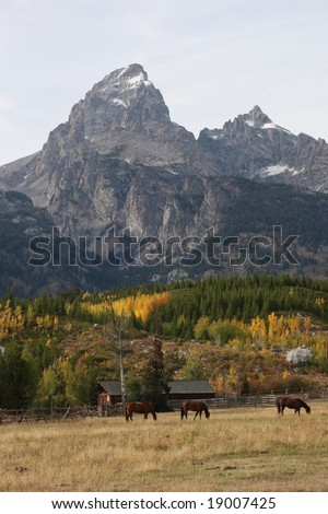 Horse Farm with Grand Teton Mountain in the Background at the Grand Teton National park - stock photo
