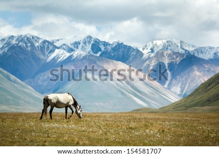 Horse feeding grass, colorful mountains background, Tien Shan, Kyrgyzstan - stock photo