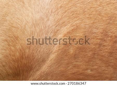 Horse fur close up  - stock photo