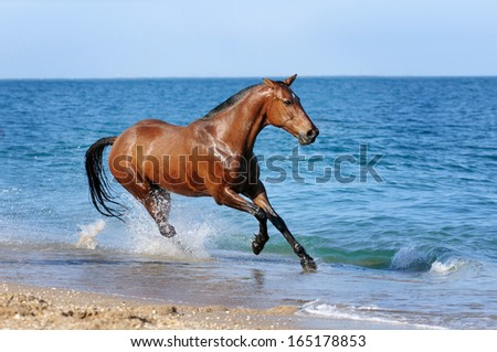 Horse galloping along the beach - stock photo