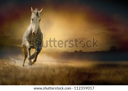 Horse galloping through sunset valley - stock photo