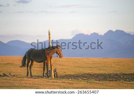 Horse graze in the pasture - stock photo