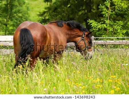 Horse grazing and taking rest on the green meadow. - stock photo
