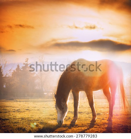 Horse grazing at sunset on autumn meadow - stock photo