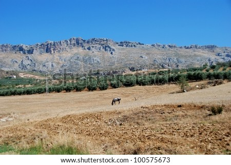 Horse grazing in field with El Torcal mountains to rea, Near Almogia, Costa del Sol, Malaga Province, Andalusia, Spain, Western Europe. - stock photo