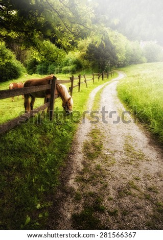 Horse grazing in mountain landscape - stock photo