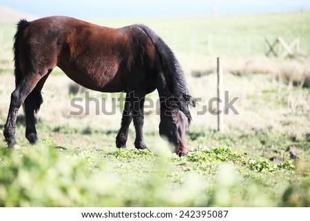 Horse grazing on a beautiful flower misty meadow  - stock photo