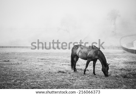 Horse Grazing on a Foggy Morning, B&W 1 - stock photo