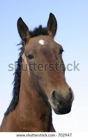 Horse head - stock photo