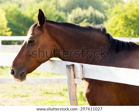 Horse head portrait outdoor - stock photo
