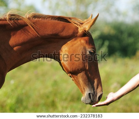 horse head with man's hand - stock photo