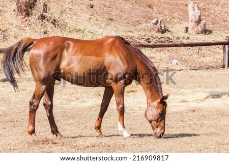 Horse Healthy Animal Horse chestnut animal  detail outdoors - stock photo