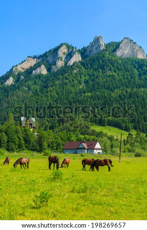 Horse herd grazing on green meadow with view of Trzy Korony, Pieniny Mountains, Poland - stock photo