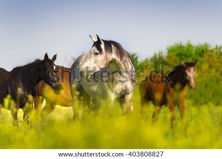 Horse herd on pasture - stock photo