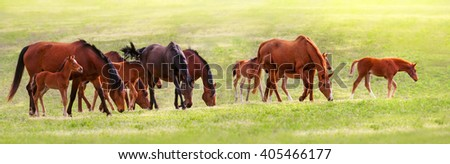 Horse herd on pasture - stock photo