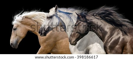 Horse herd portrait run gallop isolated on black background - stock photo
