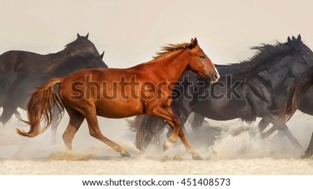 Horse herd run in desert sand - stock photo