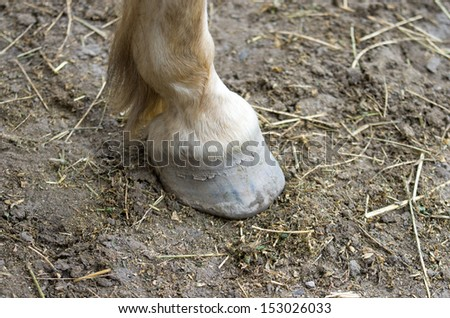 Horse hoof stands on ground - stock photo