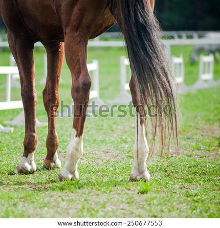 Horse hooves close up at equestrian events - stock photo