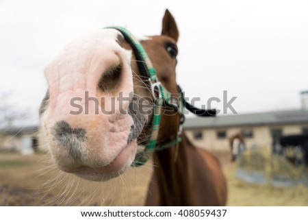 Horse in a paddock / Horse - stock photo