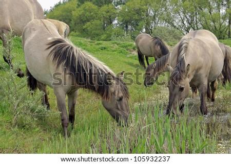 horse in beautiful landscape - stock photo