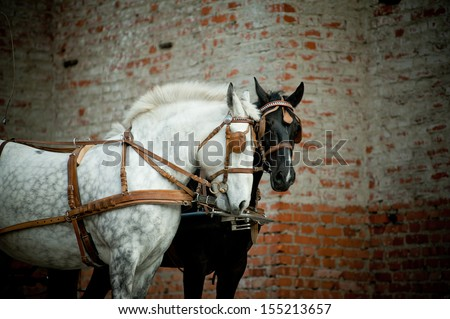 horse in carriage - stock photo