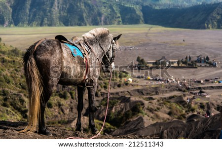 Horse in dessert with Hindu temple at Mt. Bromo - stock photo