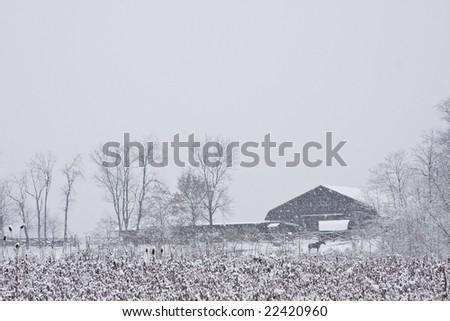 Horse in farm field near snow covered barn - stock photo