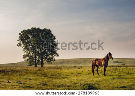 horse in field - stock photo