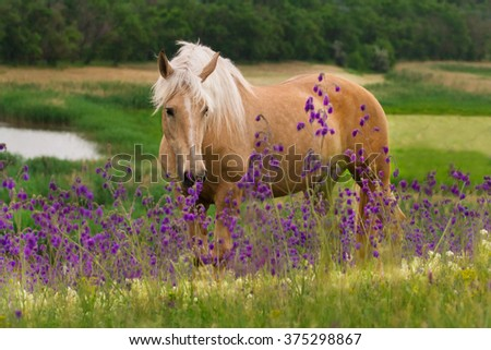 Horse in flowers - stock photo