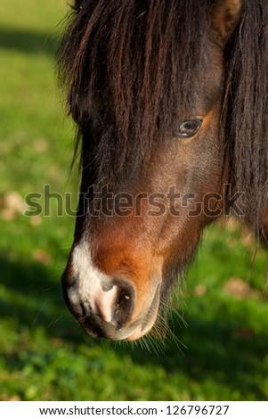 Horse in Gautegiz de Arteaga, Bizkaia, Basque Country, Spain - stock photo