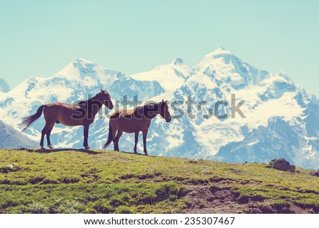 horse in mountains - stock photo