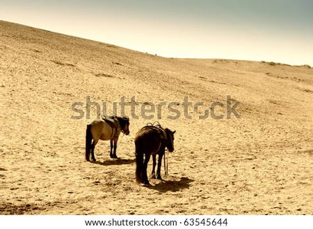 horse in the desert - stock photo