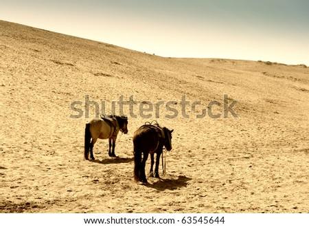 horse in the desert - stock photo