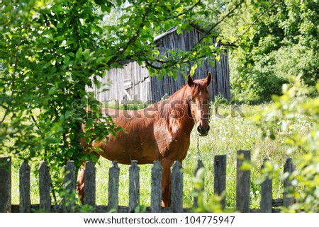 horse in the garden - stock photo