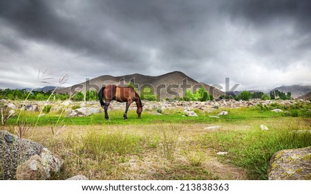 Horse in the mountains at dramatic overcast sky in central Asia - stock photo