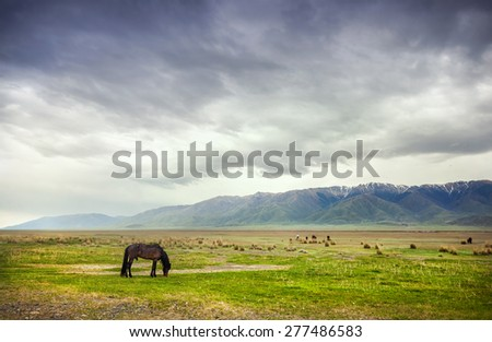 Horse in the mountains at dramatic overcast sky near Alakol lake in Kazakhstan, central Asia - stock photo