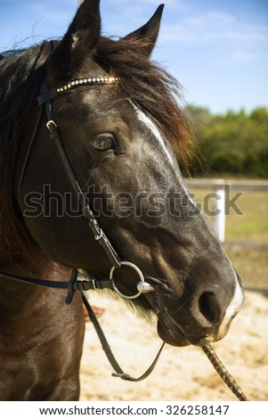 Horse in the pasture. Close up of the stallion - stock photo
